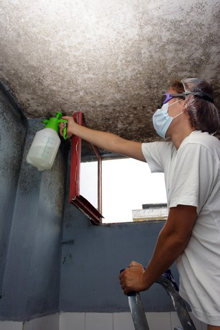 How To Select A Mold Removal Contractor?: Choosing a mold removal contractor can be a tough decision, particularly if there are many contractors in your area offering that service. How do you know the contractor you call is qualified and experienced? In this article, we explain how to select a mold removal contractor by revealing the top 10 clues that the mold removal contractor you called is inexperienced and not qualified. Clues #3, #6, and #9 are very important. Learn more!