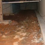 Indoor Air Quality and Your Crawl Space! - First Call Restoration specializes in mold removal. We can remove mold from every part of your home, including your crawl space. This article explains how and why your crawl space could be contaminating your indoor air. If you think you have mold in your crawl space, call (845) 226-0868!
