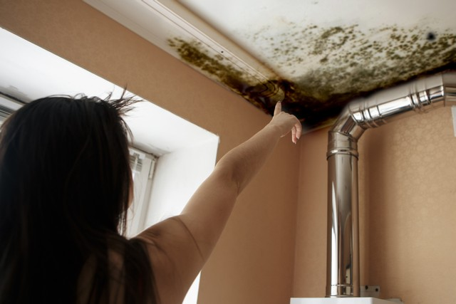 The 8 Step Process Professional Mold Remediators Follow!