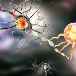 Multiple Sclerosis (MS) and Mold Exposure - MS is caused by the degeneration of the myelin sheath. When this occurs, nerve messages are not transmitted properly. The exact cause of MS is unknown. Several theories focus on genetics, viruses, climate, geography, and environment. Some researchers think mold may be a factor because exposure to Stachybotrys or Chaetomium, can destroy the myelin sheath causing many of the same symptoms that MS victims have. This article explains why some people diagnosed with MS could actually be suffering from toxic mold exposure.