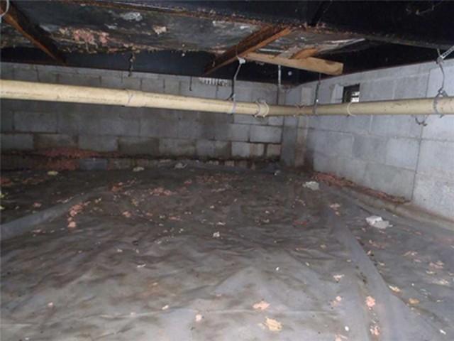 Got Crawlspace Mold Questions?
