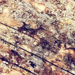 What's Causes MOLD in an Attic? - First Call Restoration is often called because our customers suspect that mold is growing in their attic. This is a common problem. The purpose of this article is to list and explains the top 4 reasons why mold will grow in your attic and how you can prevent this from happening. Learn more!