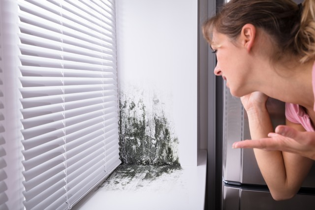 The Problem With Mold!