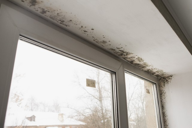 The Top Three Factors That Determine Mold Removal Cost!