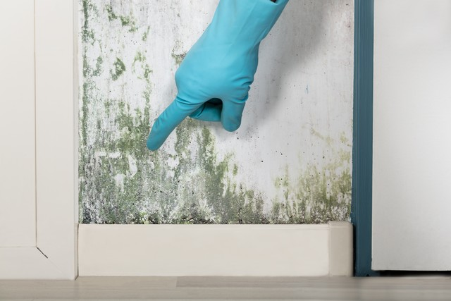 Top 9 Mold Prevention Tips After A Flood!