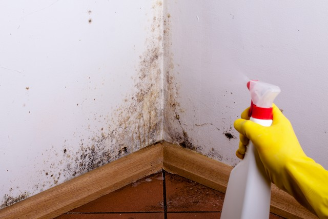 DO NOT Take These 5 Actions If You Find Mold!