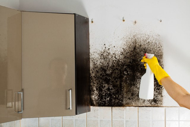 If You Find Mold In Your Home or Business Get A Professional Opinion!