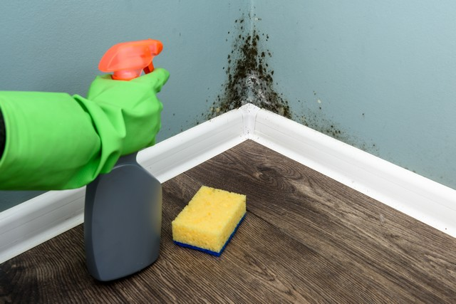 The Myth Of Killing Mold With Bleach!