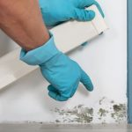 Top 7 Places You Will Find Mold In Your Home! - The biggest problem posed by mold is that it can be hidden. This is a cause for concern because of the health and structural issues mold poses. In this article, we explain why mold is growing, conditions required to help it grow, and the top 7 areas that you will most likely find mold growing.