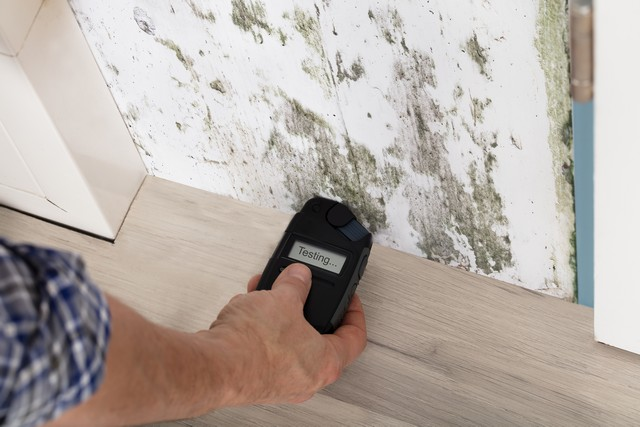 Why Does My Home Have Mold?
