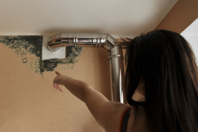 What Should I Do When I Find Mold?