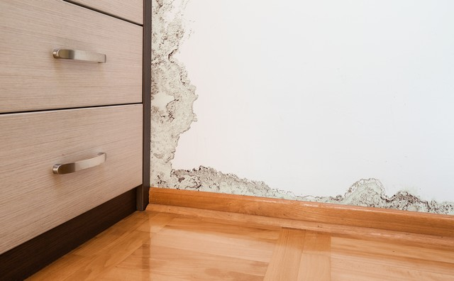 What Can I Do To Prevent Future Mold Problems?
