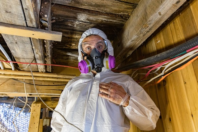 Mold Inspections Are Important!