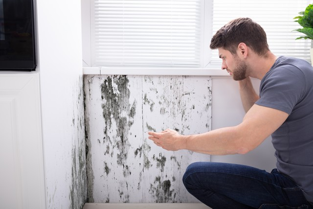 Mold Reduces The Value Of Your Property!