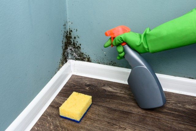 Cleaning Mold Damage is NOT a DIY'er Job!