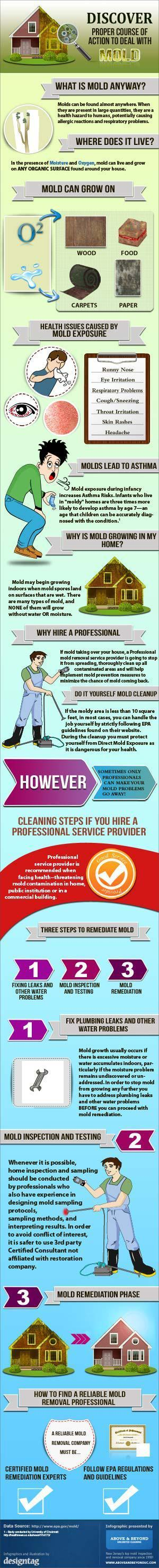 Mold Prevention and Information Summary!