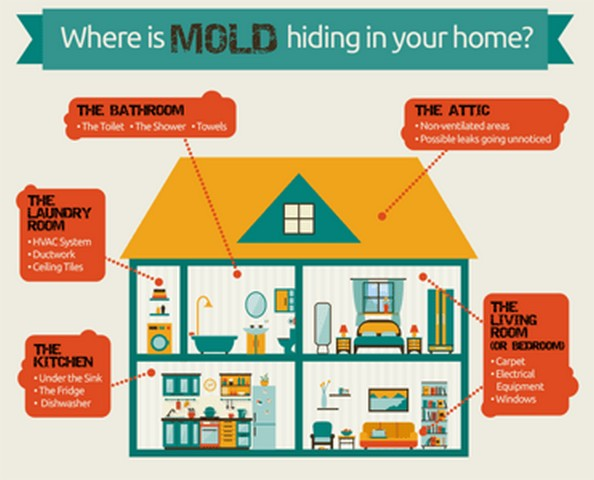 Places You Will Find Mold In Your Home!