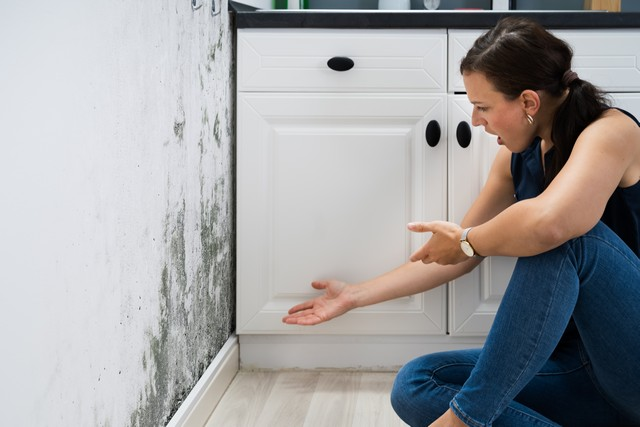 Get YES Answers To These 10 Questions Before You Hire A Mold Removal Contractor!