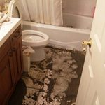 Sewage Backup Prevention Tips!: As spring gets ever so closer and temperatures begin to rise, snow run off and rain increases the number of calls we receive about flooded basements and sewage backups. Sewage backups occur when sewage from sewer lines back up into your home or business. This article lists and explains the top 5 causes of sewer backups and provides you with tips to prevent them. There are 2 key reasons, sewage backup prevention is important...learn more!