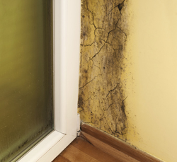 Emergency Mold Removal